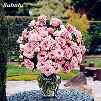 VISTARIC 6: 100 Pcs vrai Cactus Seeds, Mini Cactus, Figuier, Succulentes japonais Graines Bonsai Fleur, Plante en pot pour jardin 6