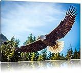 Pixxprint Adler Bild auf Leinwand, XXL riesige Bilder