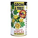 Tulip Poplar | Tree Seed Grow Kit | The Jonsteen Company