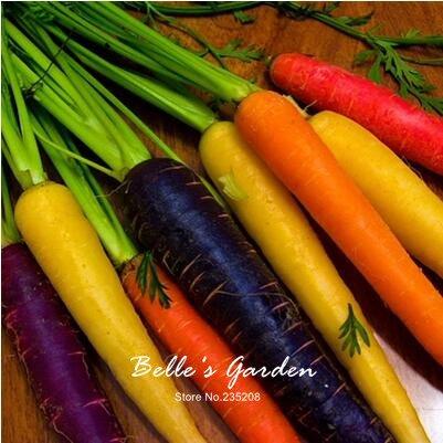 100pcs carotte Semences Rouge Bleu Jaune arc-en-Graines Légumes Jardin des Plantes Heriloom bio Daucus Carota Graines de Potager 09