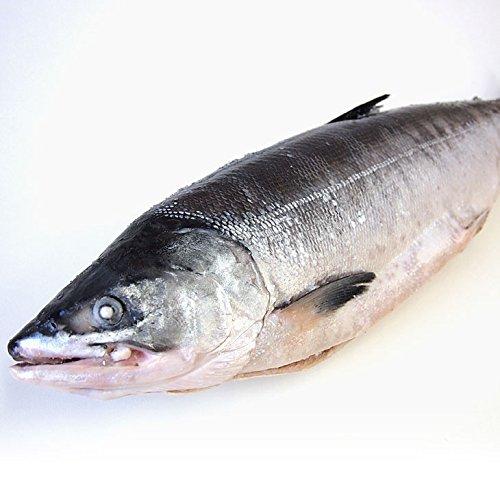 産直だより 北海道産 時鮭(トキシラズ)まるごと1尾 2.5キロ