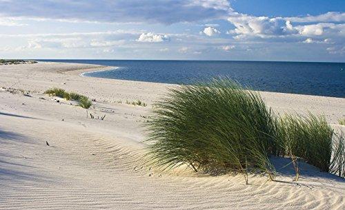Forwall vliesfotobehang, fotobehang, behang, muurschildering, vlies, wereld-der-dromen, Noordzee, strand, zand, blauw, gras, horizont Natuur VEXXXL (416cm. x 254cm.) blauw, beige, groen.