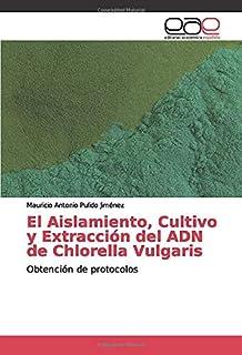 Amazon.es: chlorella