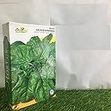 SPINACIO spinaci GIGANTE D'INVERNO GR 500 SEMENTI semi made in ITALY AMDGarden