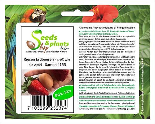 100x Riesen Erdbeeren Groß wie ein Apfel Samen Pflanze Garten Obst #155