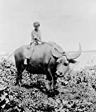 1919 photo Off for a ride astride a water buffalo, Sumai, Guam Boy on a water g8