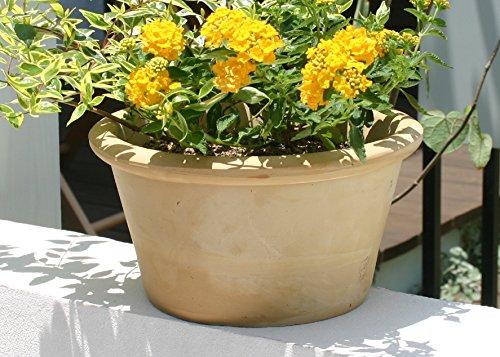 スペイン鉢カリーナ(25cm)白い植木鉢テラコッタ陶器鉢素焼き鉢プランター白色白い鉢