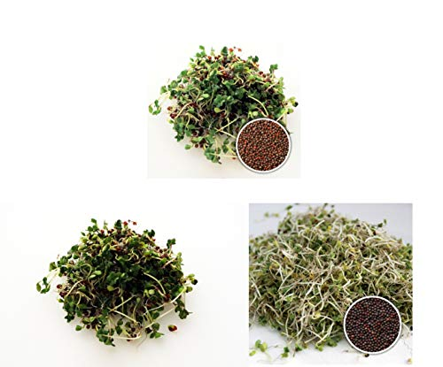 300 g BIO Keimsprossen Mischung Sulforaphan Mix Keimsaat Samen für die Sprossenanzucht je 100 g Brokkoli, Brokkoletti, Grünkohl