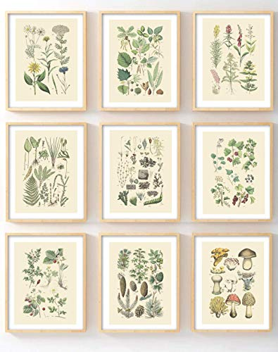 Ink Inc Botanical Prints Woodland Plants set of 9 5x7 Home Decor Wall Art Wildflower Mushrooms Fern Trees Berries
