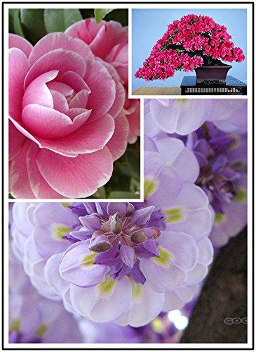 20 pcs / sac mini-graines de tournesol graines de tournesol nain série de tournesol hauteur 40cm Fleur Graines