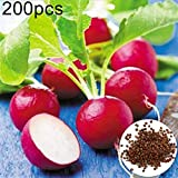 Gilroy 200Pcs Early Scarlet Color Radish Seeds Vegetable Plant Home Office Garden Balcony Decor for Planting for Indoor and Outdoor