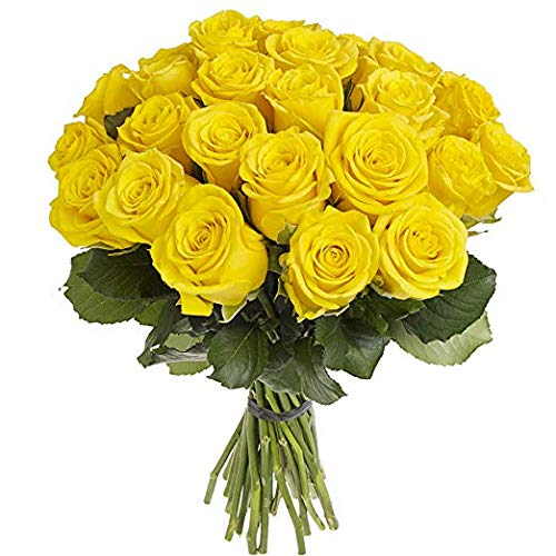 Green Choice Fresh Flowers | 24 Yellow Roses Fresh Cut Flowers For Delivery | Prime Fresh Bulk Flowers | Birthday Flowers | (2 DFlower Cut Per Order Direct from Farm Fast Free Delivery Long Lasting