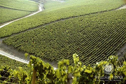 【数少ないシャブリ5つ星獲得生産者】ウィリアムフェーブルシャブリ[白ワインフランス750ml]