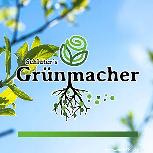 Schlüter's Grünmacher - Natürliches Pflanzenstärkungsmittel für mehr Ertrag und Gesundheit (100g)