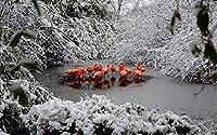 大人の教育用ジグソーパズルティーンエイジャーと子供のための500個の脳チャレンジゲーム 冬の水のフラミンゴ ユニークなギフトと家の装飾ジグソーパズル