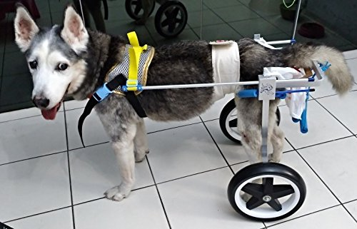 Adjustable Dog Wheelchair, Hip Height: 8'-26', Weight 0 to 100 lbs, hind legs Rehabilitation (4. Hip Height: 16'-20', Weight: 40-60Lbs)