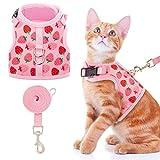 Best cat harness - BINGPET Cat Harness and Leash Set - Escape Review
