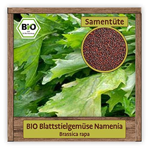 BIO Rübstiel Samen Sorte Namenia (Brassica rapa) Gemüsesamen Rübstiel Saatgut