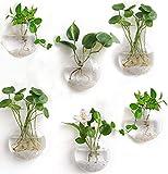Terrarios colgantes, maceta de flores montada en la pared, macetas de burbujas de pared, soporte para plantas de aire, contenedor de plantas hidropónicas para decoración de pared(paquete de 6)