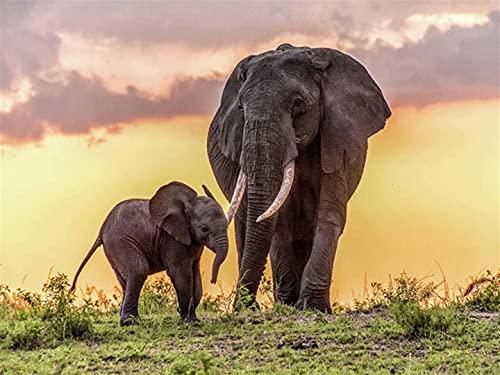 300 Piezas Rompecabezas Hogar Elefante Marco de Fotos Decoración Puzzles de Madera para Adultos 38x26cm
