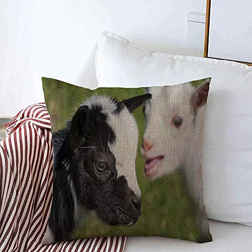 Throw Pillow Covers 1pack Little Goat Just Born White Goatling Nannie Vertebrate Baby Farm Agriculture Breeding Cattle Domestic