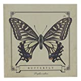 ナミアゲハチョウ[メモ帳]ブロックメモ/昆虫標本シリーズ