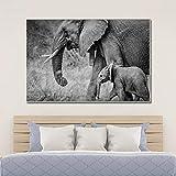 QZROOM Elefantes Salvajes en Blanco y Negro Madre Hijo Animales Pintura en Lienzo Carteles e Impresiones Imagen de Arte de Pared para Sala de estar-60x90cm-Sin Marco