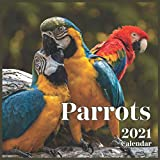 Parrot Calendar 2021: Cute Parrot Photos Monthly Calendar 16 Month Wall & Office Calendar Cute Gift For Parrot Lover Women & Men Girls & Boys