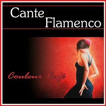 Couleur Café Cante Flamenco Desde Cadiz