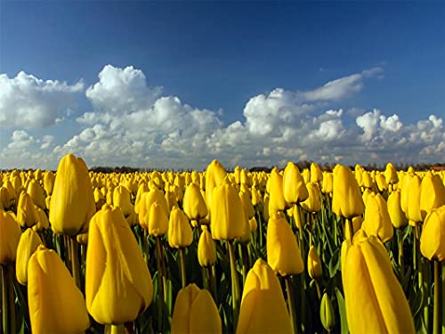 1000 Pieces Adult Puzzle Kids Jigsaw Puzzles Beautiful Yellow Tulips Field Decoration For The Home Toy Game Wooden Assembling