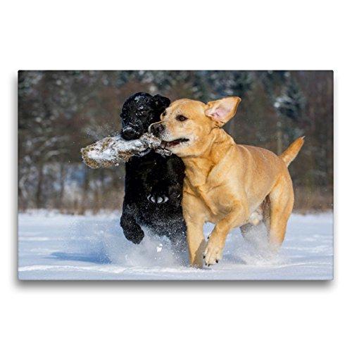 Calvendo Labrador Retriever – un corazón sobre 4 Patas, 75x50 cm