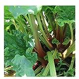 Premier Seeds Direct RHU01 - Semillas para Verduras (ruibarbo)