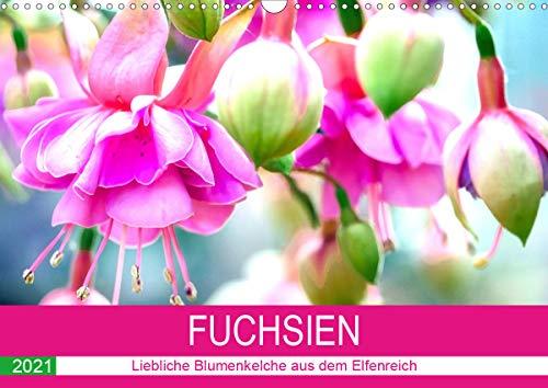 Fuchsien. Liebliche Blumenkelche aus dem Elfenreich (Wandkalender 2021 DIN A3 quer)