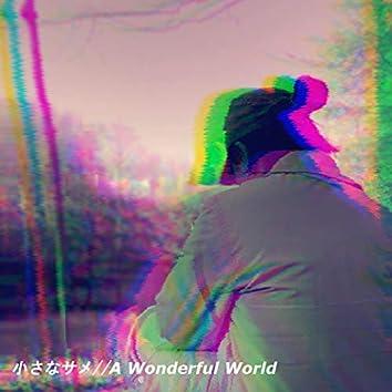 Little Shark // a Wonderful World