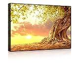 Lightbox-Multicolor | Beleuchtetes Wandbild | Verwurzelter starker Baum im Sonnenuntergang | 60x40 cm | Front Lighted