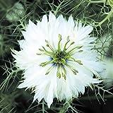 【メール便配送】国華園 種 花たね ニゲラ ホワイト 1袋(1000mg)【※発送が株式会社 国華園からの場合のみ正規品です】