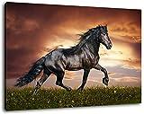 Schwarzes Pferd, Leinwand Bild, Format:100x70 cm, Bild auf