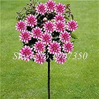 Comprar bulbos de flores de otoño online