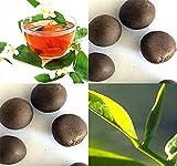 Big Pack - (25) Tea Plant Seed - Camellia sinensis - Edible Flower Seeds by MySeeds.Co (Big Pack - Tea Plant)