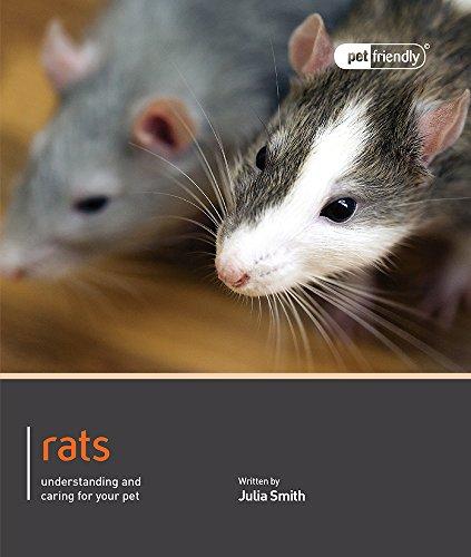Rat (Pet Friendly)