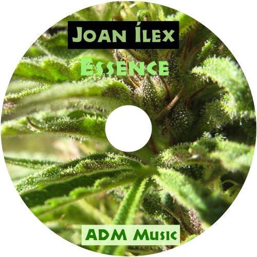 Joan Ilex