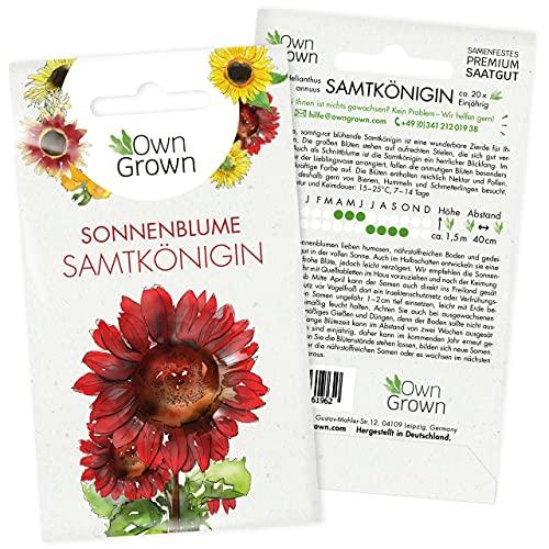 Sonnenblumen Saatgut für rote Sonnenblume Sorte Samtkönigin (Helianthus annuus), Premium Sonnenblumen Samen, Sonnenblume Saat zur Anzucht von ca. 20 Sonnenblumen Pflanzen, Blumensamen von OwnGrown