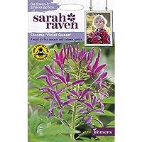 【輸入種子】 Johnsons Seeds Sarah Raven Cut flowers & gorgeous gardens Cleome Violet Queen サラ・レイブン カットフラワーズ クレオメ・ヴァイオレット・クィーン ジョンソンズシード