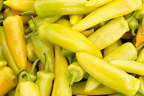 Asklepios-seeds® - 15 graines de chili hungarian yellow hot wax,Le piment banane