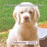 Clumber Spaniel puppies Calendar 2022