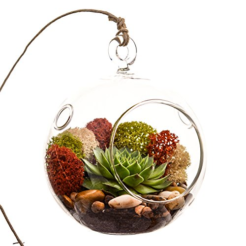 Bliss Gardens Succulent Terrarium Kit with Moss and River Rocks - 4