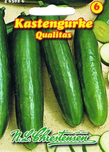 Kastengurke Qualitas Gurke Salatgurke