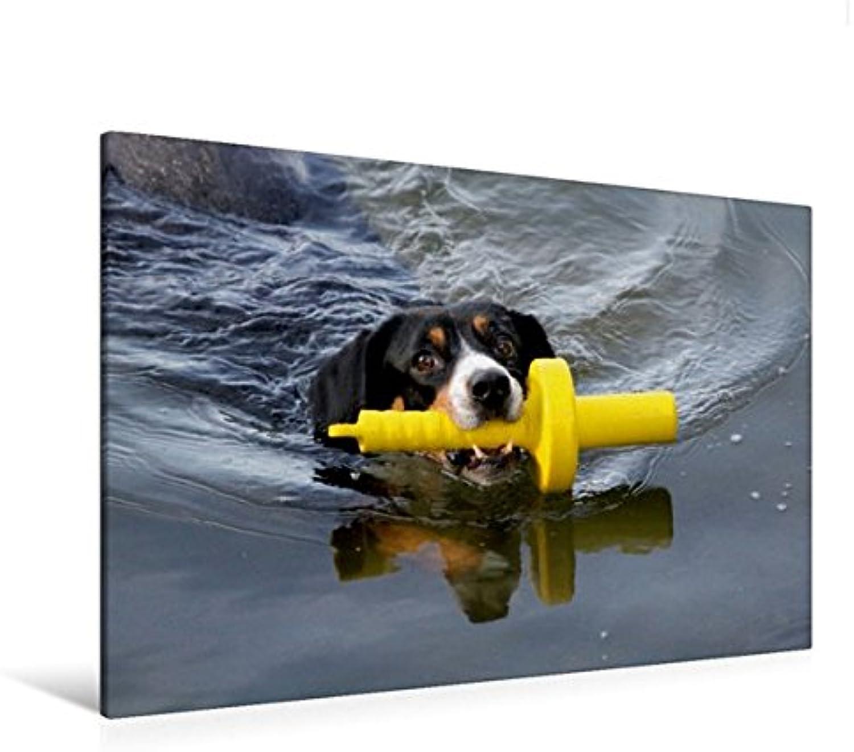 Calvendo Premium Textil-Leinwand 120 cm x 80 cm Quer, Ein Motiv aus Dem Kalender Entlebucherr Sennenhunde begleiten Sie durch Das Jahr   Wandbild, Bild auf Leinwanddruck  Badespaß Tiere Tiere B01KO3I3EC Lebensecht | Großartig