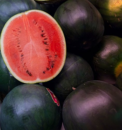 50 Black Diamond Watermelon Seeds for Planting - Heirloom Non-GMO Fruit Seeds for Planting - Grows Big Giant Watermelons Averaging 30-50 lbs
