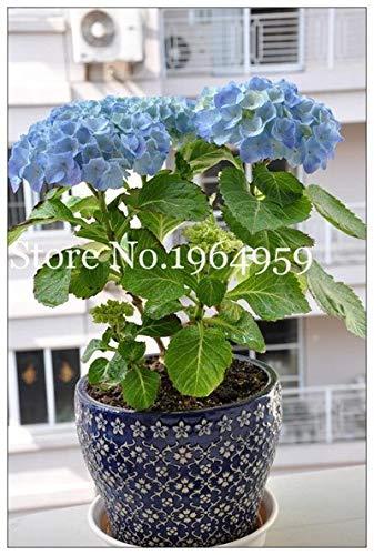 Bloom Green Co. Innenfarbe 50 PC...